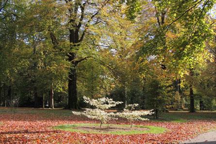 Panoramio Park Hartenstein-450