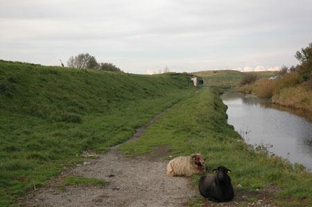 marijkebeek Stelling Den Helder Liniedijk-450